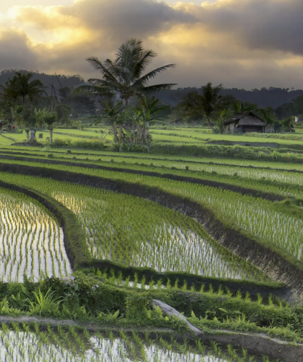 E-Rice: Sustainable Agriculture