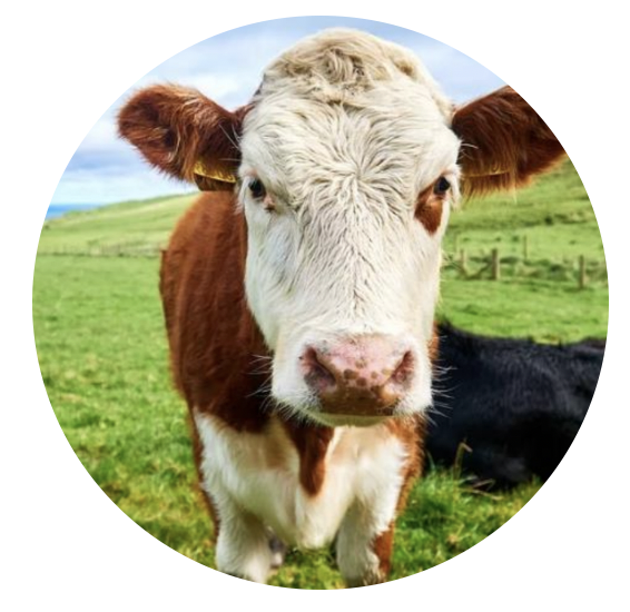 Sustainable Cattle Farming Fund